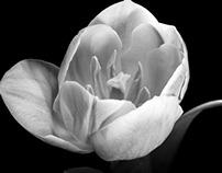 Macro Florals B&W