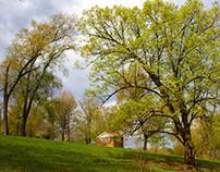 MAGYAN CREATIVE: Rebirth of Spring