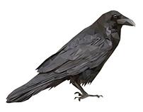 Lowpoly birds