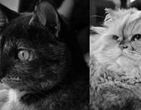 Le Chat Blanc et Le Chat Noir