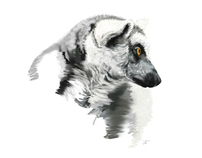 Portraits of Lemurs