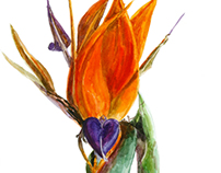 Bird of Paradise Flower II