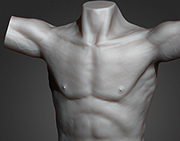 male torso sculpt