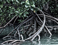 Rocks and Roots, Andaman Sea