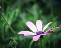 Flowers macro proyect