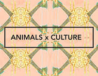 Patterns in Animals x Culture