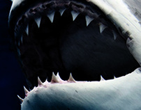 Jaws DVD Cover