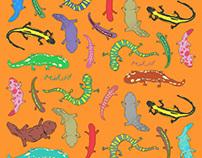 Soils of Salamanders