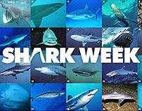 INTERACTIVE LIGHTBOX: SHARK WEEK