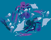 Cephalopods ( + Jellyfish and Stingrays )