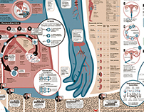 Sistema reproductor_Reproductive System