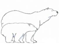 Protect the Polar Bears