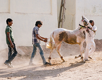 Horse Training - Gujarat