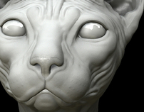 Modelling - Cat