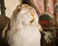 TMBShow - The Bunny Museum