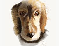 Izzy the family dog