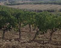 Toscana wineyard summer