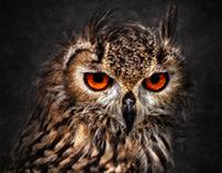 Hunting Eyes