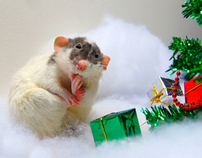 Holiday Rat Card Collection