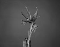 Niečo o kvetoch