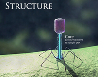 Bacteriophage Animation