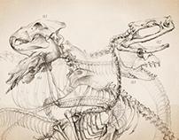 Skeletons II.