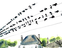 The Migration of Swallows