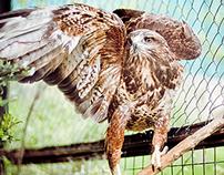 Photos: Animals