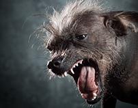 XOLO DOG TINKERBELL