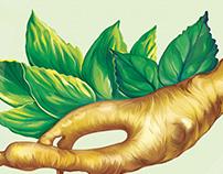 Ginseng Illustration for Colgate