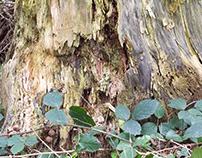 alter Baumstamm - old tree trunk