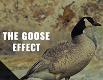 The Goose Effect