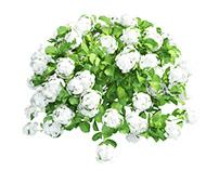 Plants Hydrangea set 07