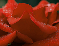 Red, Red Roses