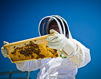 The Learn Project: Urban Beekeeping