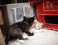 Peru :: Dogs, Cats & Kids