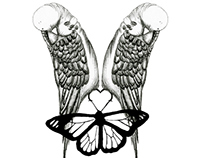 The Budgie and the Butterfly