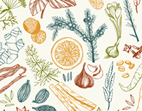 Ink hand drawn spices and herbs illustrations