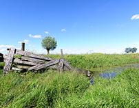 Spring in a dutch field