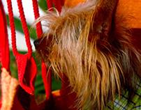 Fotografia | Vida de cão