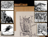 Pen and Ink - Nature subjects in technical & quill pen.