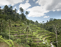 Rice Terraces of Tegalalang