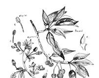 If I was botanical