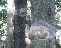 Female Trees