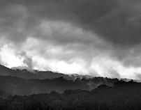 Rainforest - The DRC