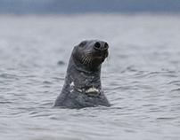 Newts and Seals