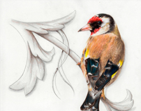 bird scroll