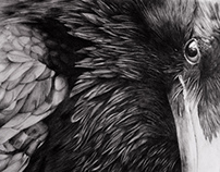 Raven - Pencil drawing