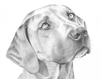 Rhodesian Ridgeback Illustration