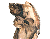 firewood portraits